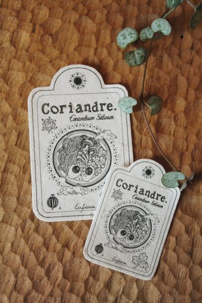 coriandre 2